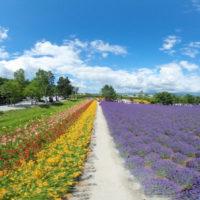 furano_lavender01_eye